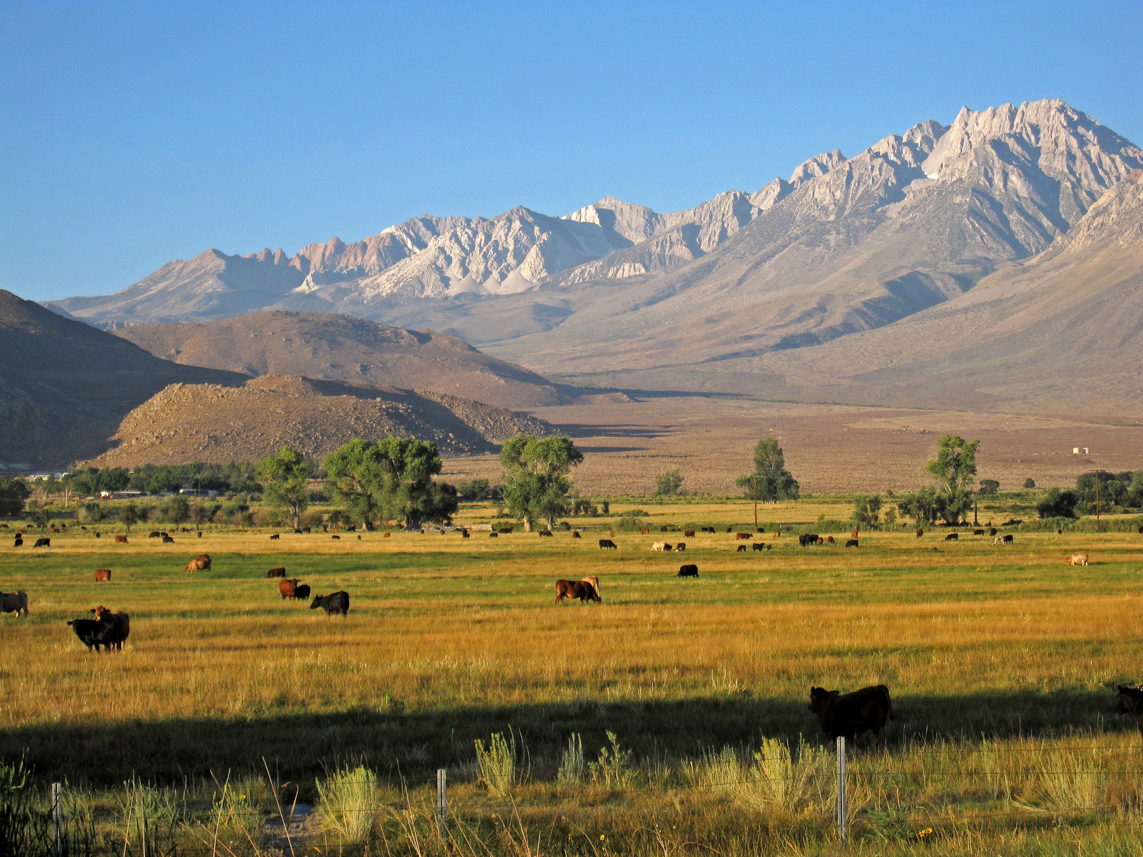 Basin Mountain and the eastern Sierra north of Bishop, CA