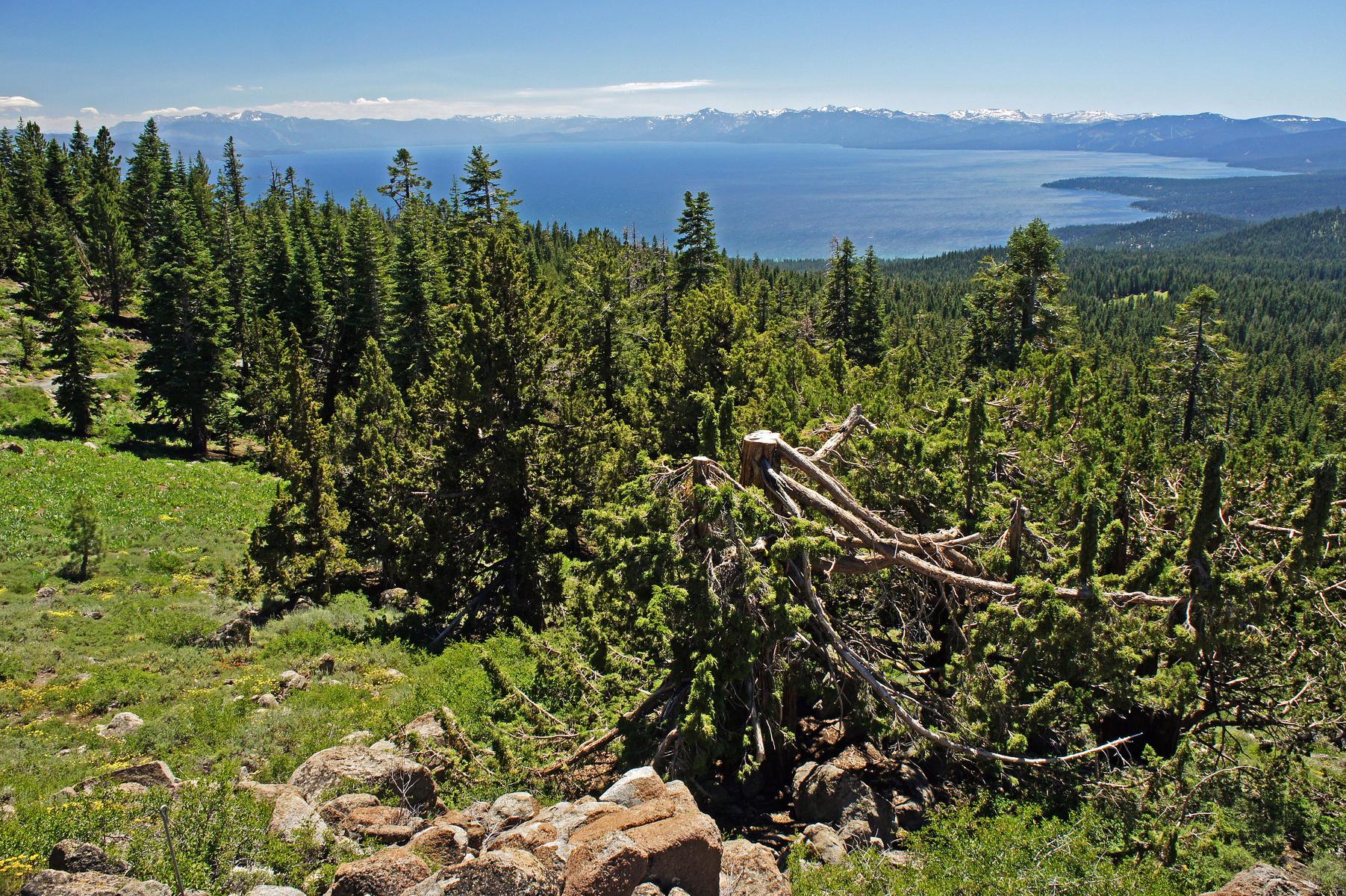 overlooking Lake Tahoe, near Truckee, California