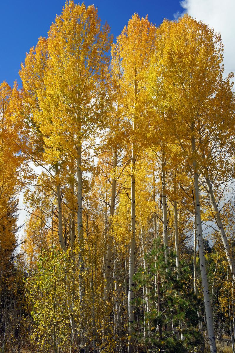 near Marlette Lake, east of Lake Tahoe, Nevada